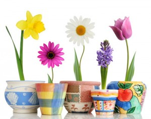spring_flowers_in_pots1
